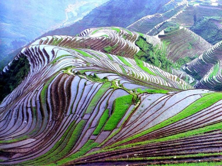 15-terrazas-de-arroz