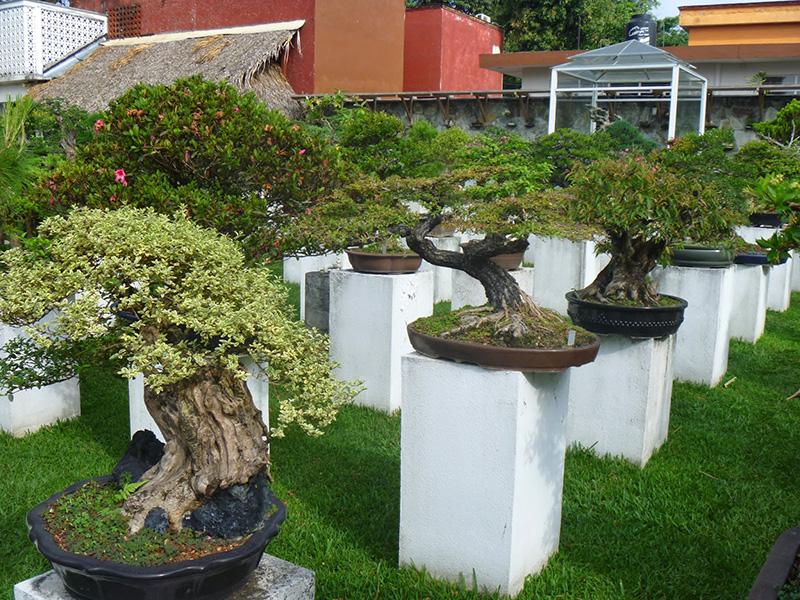 museo-del-bonsai