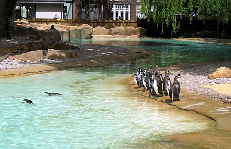 26. Zoológico de Londres