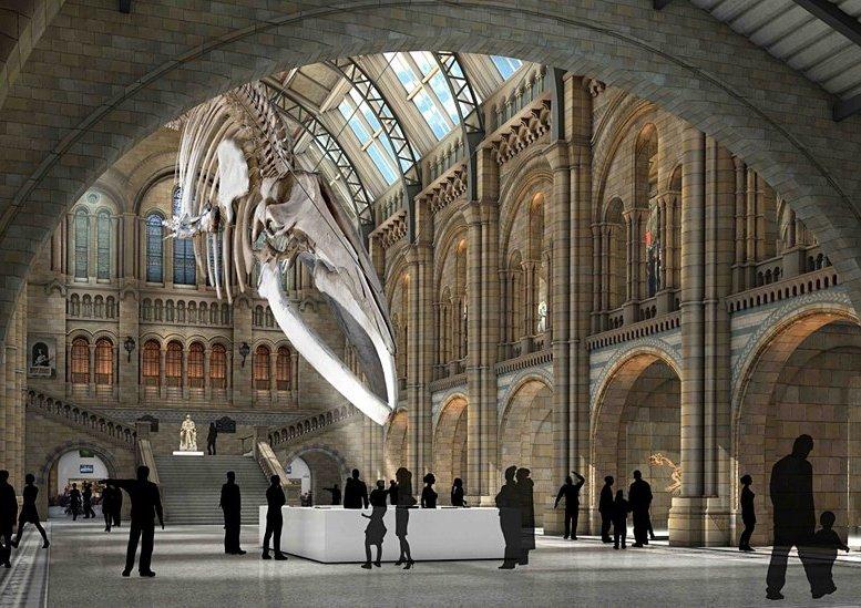 9. Museo de Historia Natural