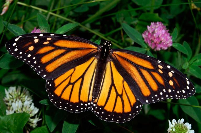 11. Ver mariposas monarca