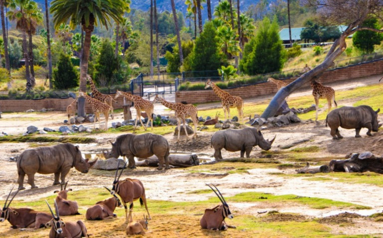 5. San Diego Zoo Safari Park
