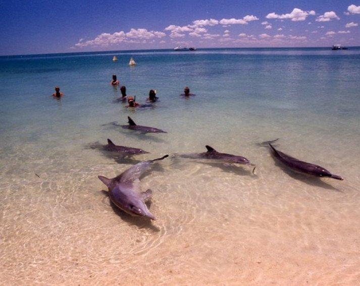 6. La playa de los delfines, Monkey Mia