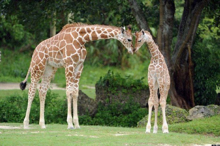 12. Zoo Miami