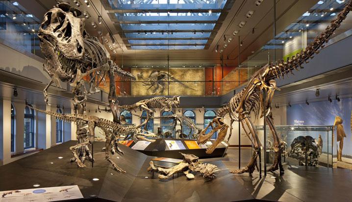 36. Museo de Historia Natural