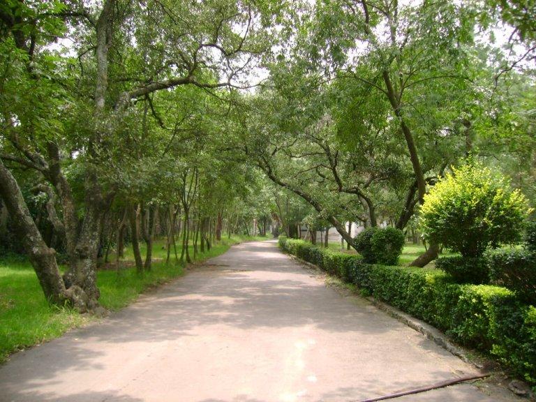 46. Bosque de Tlalpan