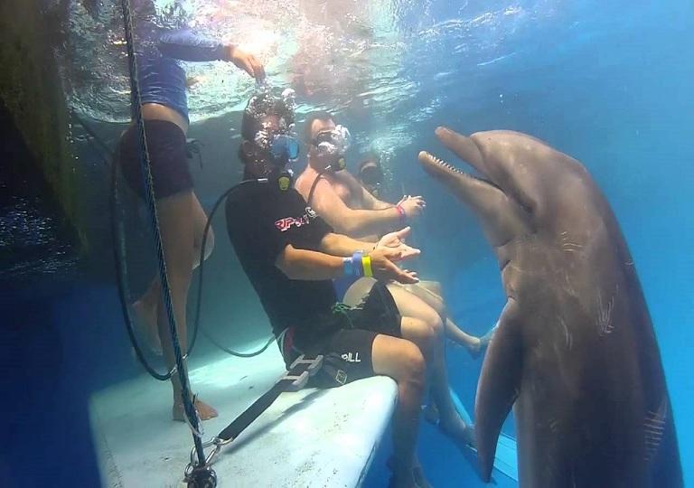 3. Visita el Dolphin Adventure