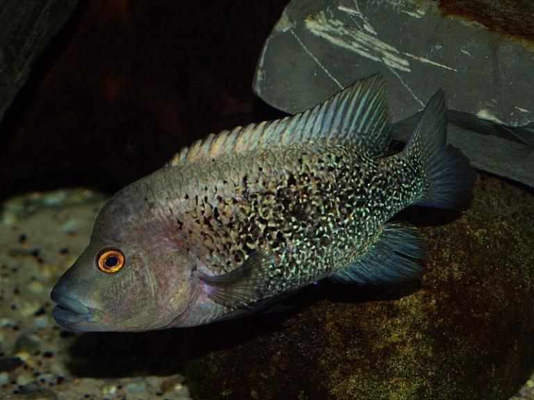 12. ¿Cuáles especies animales viven en la laguna y sus alrededores