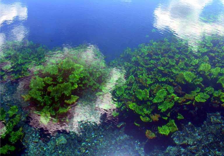 14. ¿Qué pueden decirme de la flora en la laguna y sus alrededores