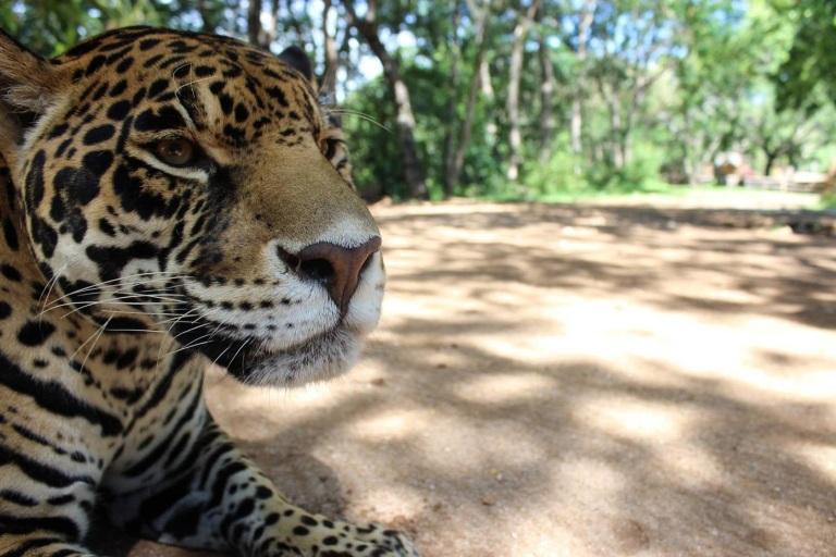 36-vale-la-pena-ir-al-zoologico-zoofari