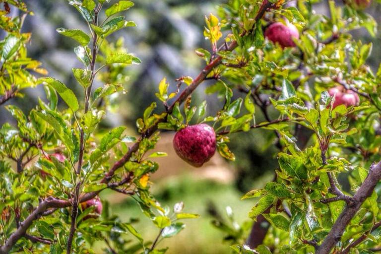 20-que-es-la-ruta-de-la-manzana