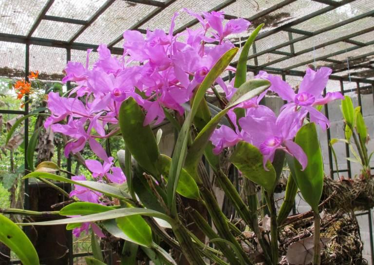 5-asombrate-con-la-variedad-y-belleza-de-las-orquideas