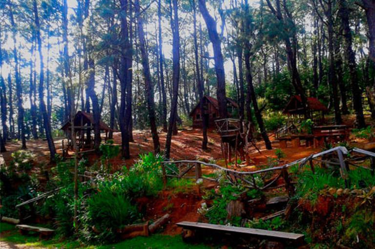 12-que-hay-en-el-bosque-la-zanja