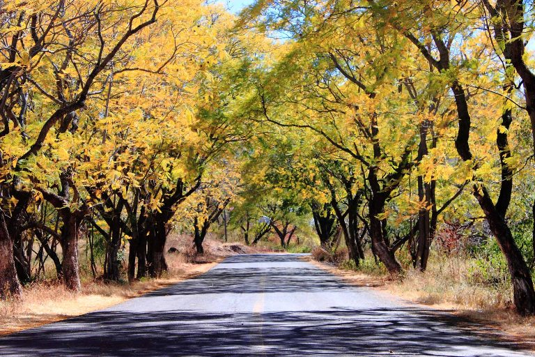 7-como-son-los-bosques-cuauhtemoc-y-juarez