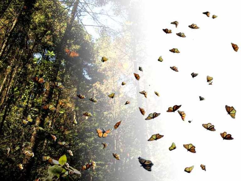11-como-sobreviven-las-mariposas-en-tan-largo-viaje