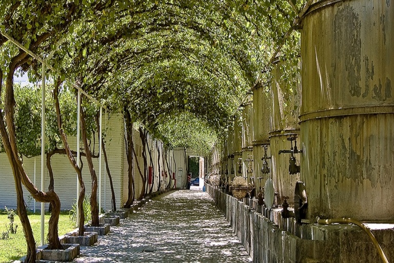 13-cual-es-la-principal-vitivinicola-de-parras
