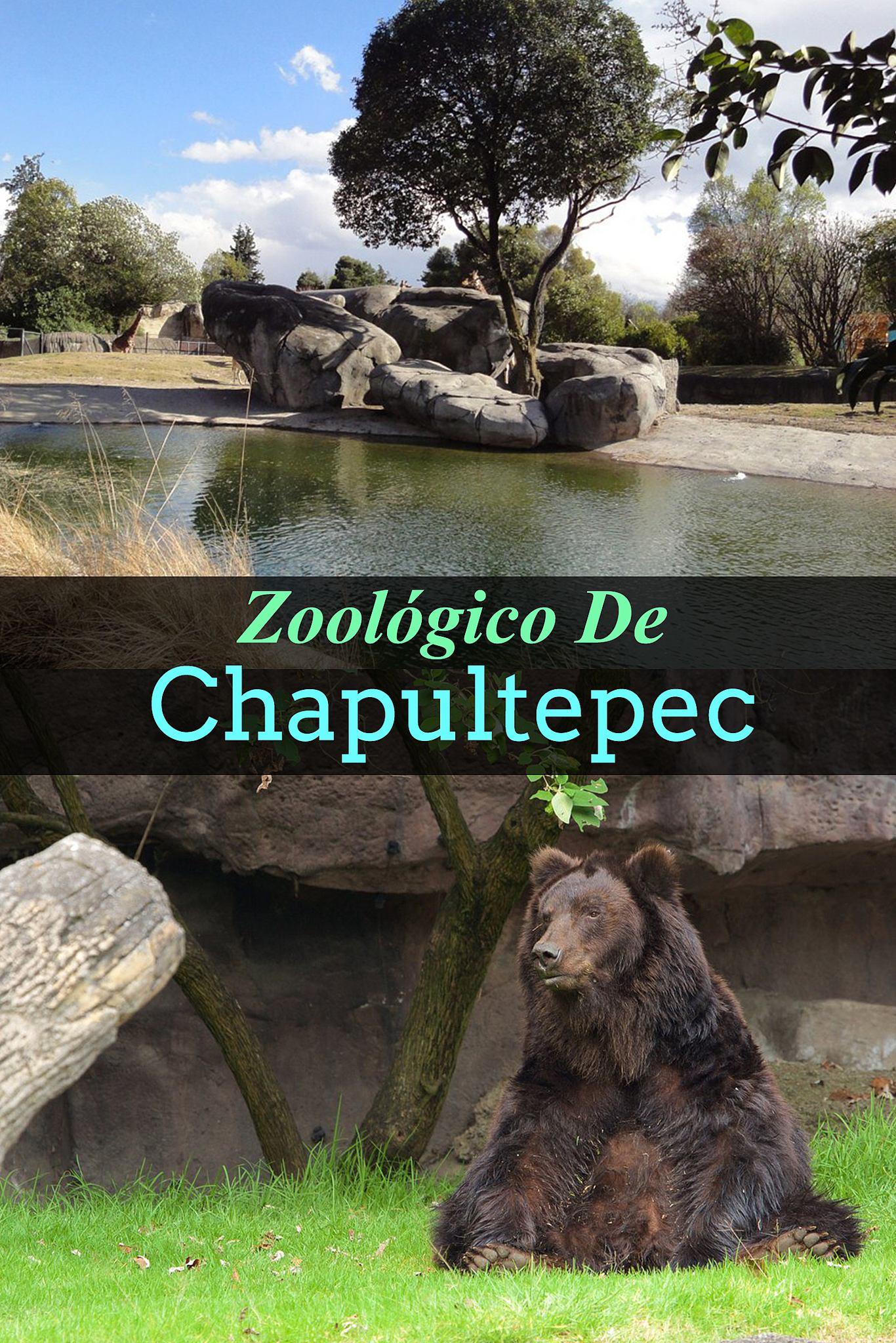 Resultado de imagen para zoologico chapultepec pics